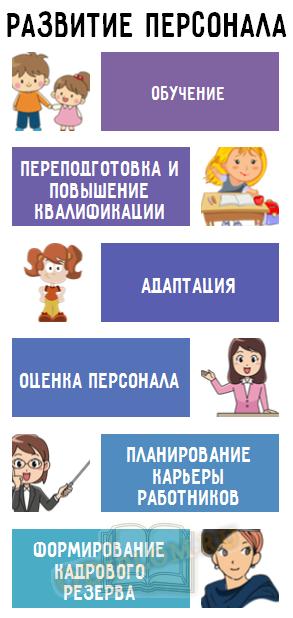 цикл развития персонала