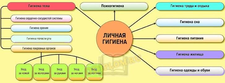 Структура гигиены человека