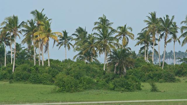 Природа в Гане
