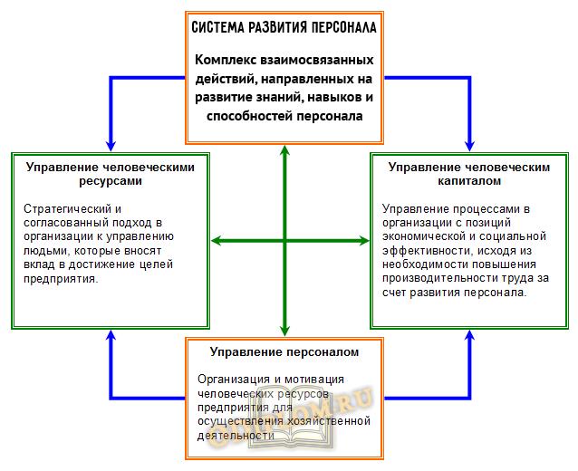 развитие персонала организации